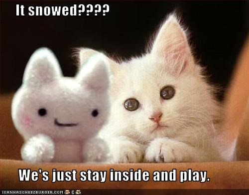 cute,holiday lols 2010,kitten,playing,snow,stuffed animals,toy
