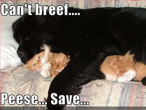 Can't breef....  Peese... Save...