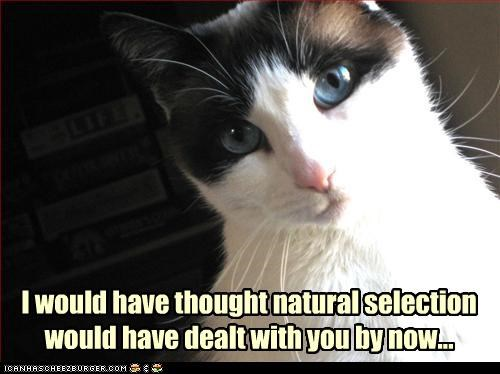I would have thought natural selection would have dealt with you by now...