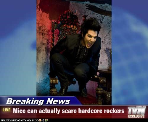 Breaking News - Mice can actually scare hardcore rockers