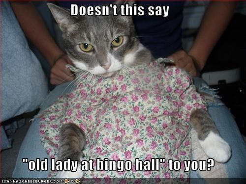 bingo,cat,crossdress