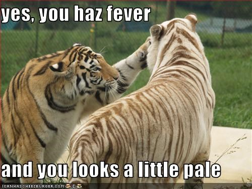 yes, you haz fever  and you looks a little pale