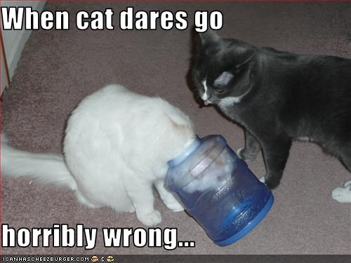 When cat dares go  horribly wrong...