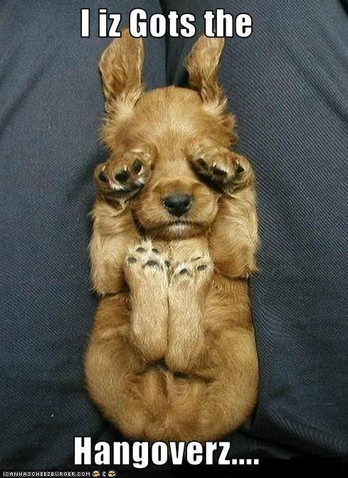 I iz Gots the   Hangoverz....