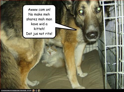 Awww com on!  No make meh sharez mah man kave wid a kitteh! Dat jus not rite!