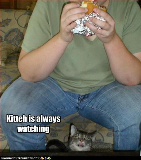 Kitteh is always watching