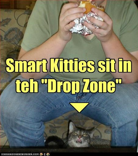"Smart Kitties sit in teh ""Drop Zone"""