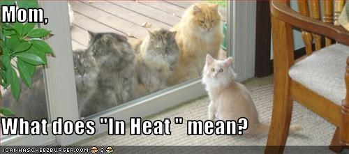 """Mom,  What does """"In Heat """" mean?"""