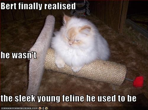 Bert finally realised he wasn't the sleek young feline he used to be