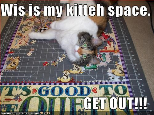 Wis is my kitteh space.  GET OUT!!!