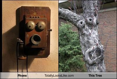 Phone Totally Looks Like This Tree