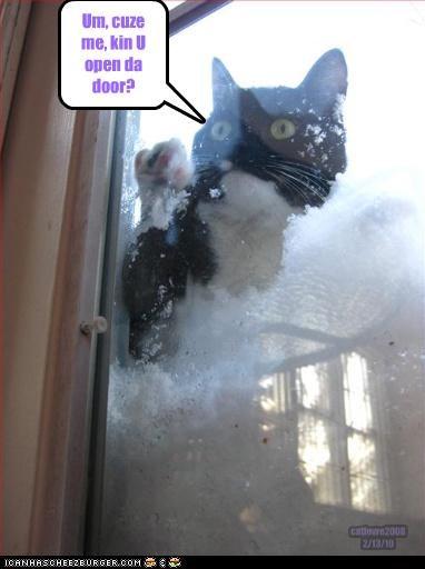 cat,knock,snow