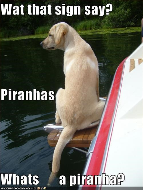 Wat that sign say? Piranhas Whats       a piranha?