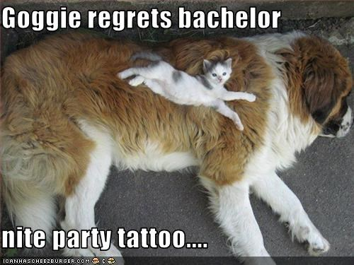 Goggie regrets bachelor  nite party tattoo....