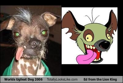 Worlds Ugliest Dog 2006 Totally Looks Like Ed from the Lion King