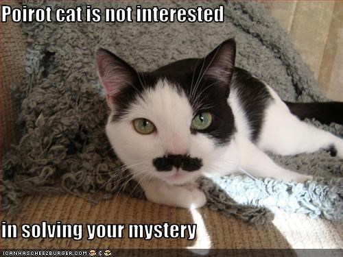 Poirot cat is not interested  in solving your mystery