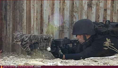 Cats,guns,lol,swat team,wtf
