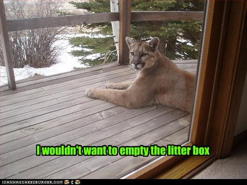 I wouldn't want to empty the litter box