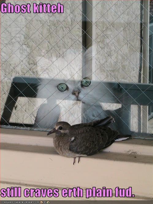 cat,craving,fud,ghost