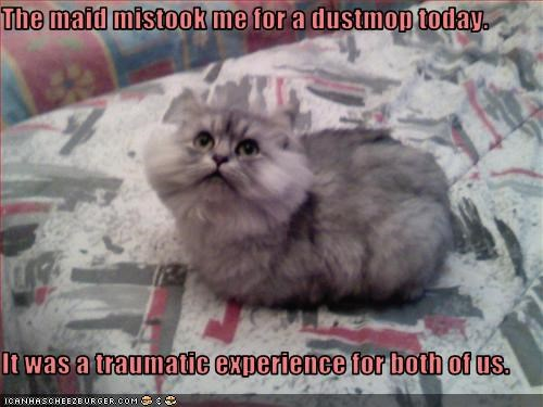 The maid mistook me for a dustmop today.  It was a traumatic experience for both of us.