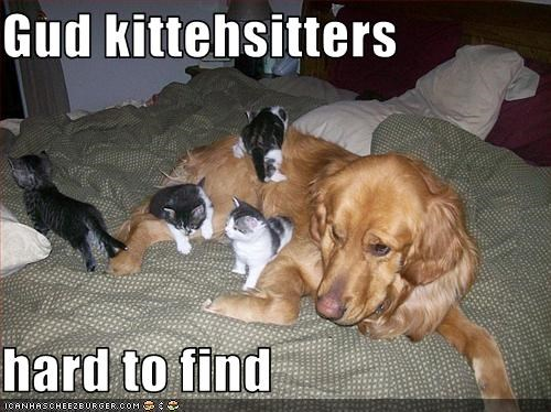 Gud kittehsitters  hard to find