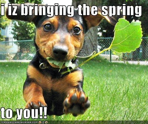 i iz bringing the spring  to you!!