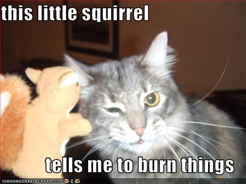 this little squirrel   tells me to burn things