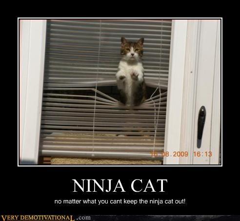 scary,wtf,ninja cat
