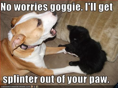 No worries goggie. I'll get  splinter out of your paw.