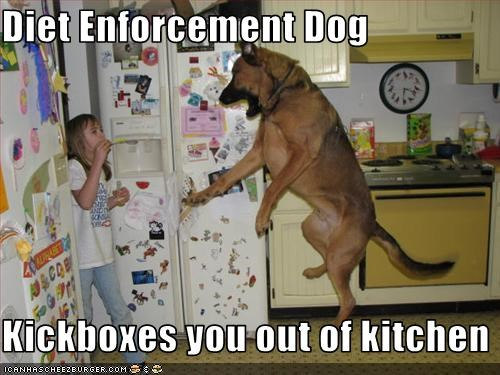 Diet Enforcement Dog  Kickboxes you out of kitchen
