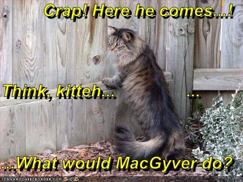 Crap! Here he comes...! Think, kitteh...               ... ...What would MacGyver do?
