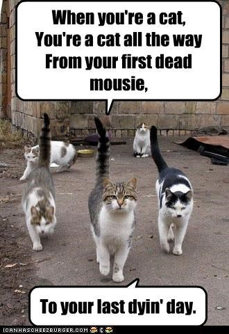 When you're a cat, You're a cat all the way From your first dead mousie,