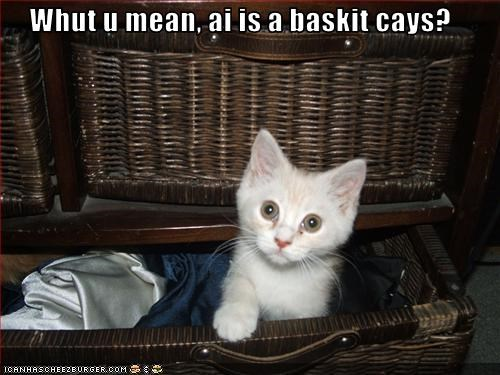 Whut u mean, ai is a baskit cays?