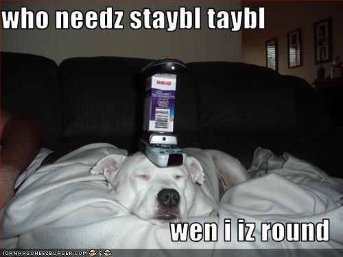 who needz staybl taybl   wen i iz round