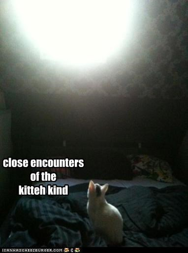 close encounters of the  kitteh kind