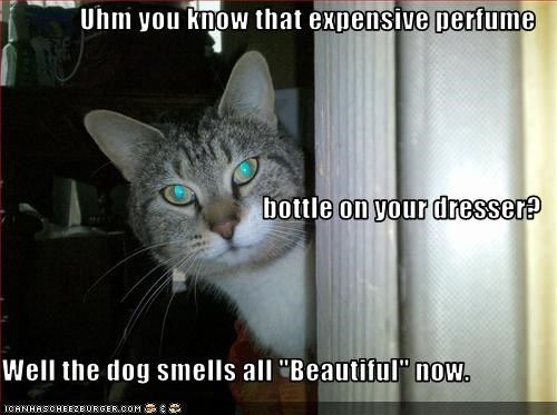 "Uhm you know that expensive perfume bottle on your dresser? Well the dog smells all ""Beautiful"" now."