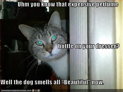 bad cat,destruction,dogs,perfume