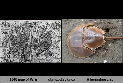 1540 map of Paris Totally Looks Like A horseshoe crab