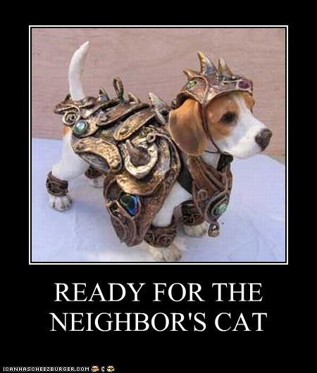 READY FOR THE NEIGHBOR'S CAT