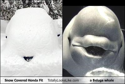 Snow Covered Honda Fit Totally Looks Like a Beluga whale
