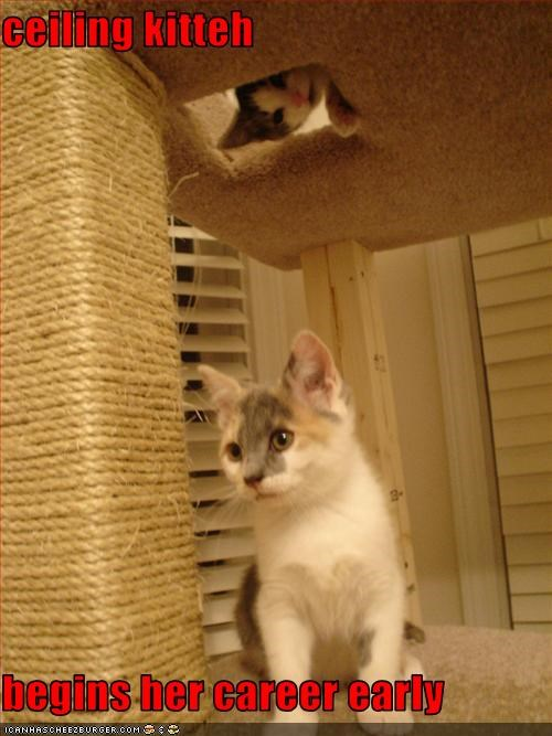 ceiling kitteh  begins her career early