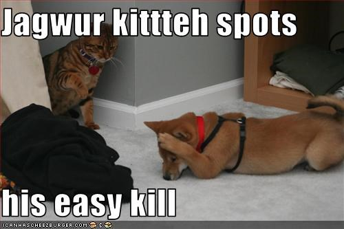 Jagwur kittteh spots   his easy kill