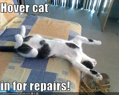 Hover cat  in for repairs!