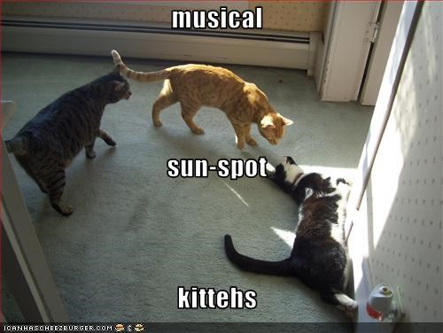 musical sun-spot kittehs