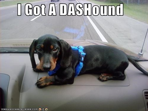 I Got A DASHound