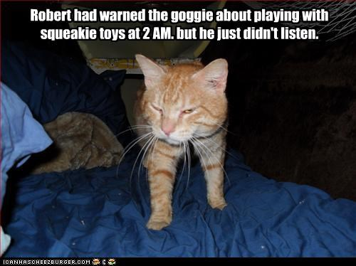Robert had warned the goggie about playing with squeakie toys at 2 AM. but he just didn't listen.