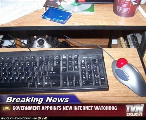 Breaking News - GOVERNMENT APPOINTS NEW INTERNET WATCHDOG