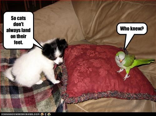 border collie,busted,Cats,figured it out,myth,parrot,puppy,who knew