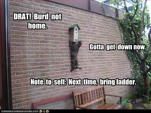 DRAT!  Burd  not  home.