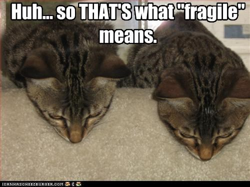 """Huh... so THAT'S what """"fragile"""" means."""